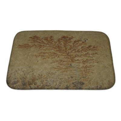 Bravo Close Up of Fossil Ferns Petrified in a Stone Slab Bath Rug Size: Small