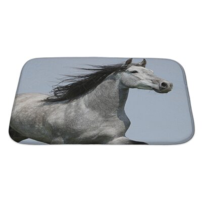 Animals Head of Running Carthusian Horse with Flattering Mane Isolated Bath Rug Size: Large