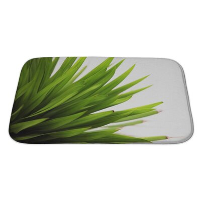 Leaves Closeup of a Leaf Isolated Bath Rug Size: Large