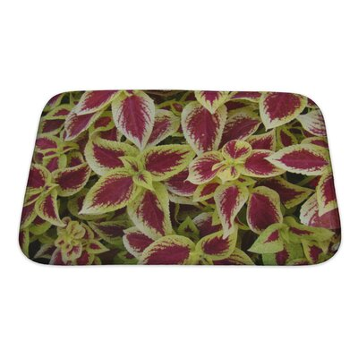 Flowers Florida Plants Bath Rug Size: Small