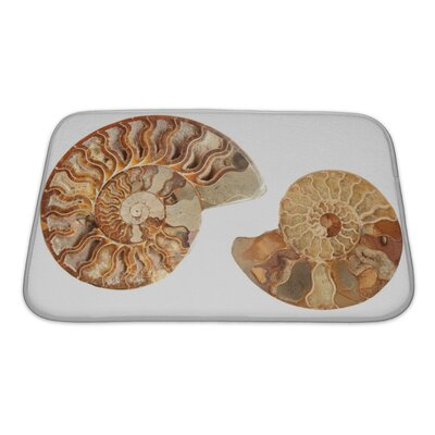 Marine 2 Beautiful Ammonites Isolated Bath Rug Size: Small