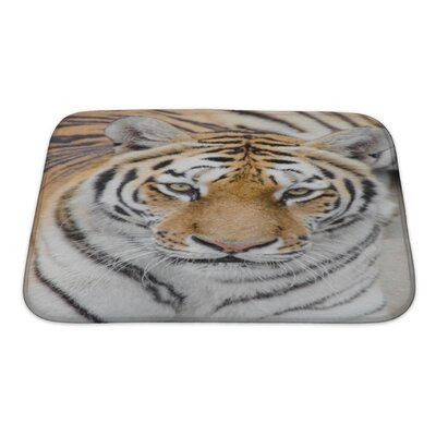 Animals Tiger on the Zoo Bath Rug Size: Small