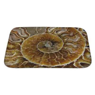 Marine an Extreme Closeup of a Crustacean Fossil Bath Rug Size: Large
