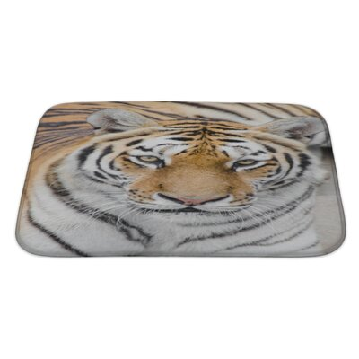 Animals Tiger on the Zoo Bath Rug Size: Large