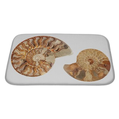 Marine 2 Beautiful Ammonites Isolated Bath Rug Size: Large