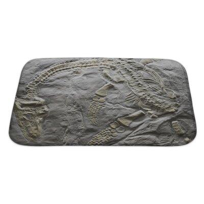 Dinosaurs Skeleton of Ancient Dinosaur Rock, Evolution Bath Rug Size: Large