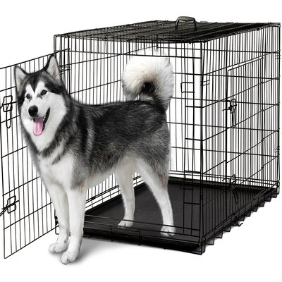 Folding Pet Crate Size: 31 H x 29 W x 48 L