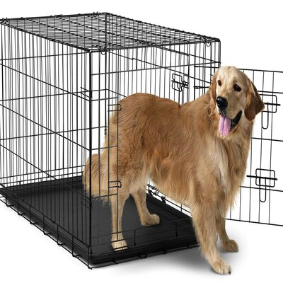 Folding Pet Crate Size: 29 H x 27 W x 42 L