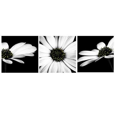 Monochrome Flower 3 Piece Photographic Print On Canvas Set