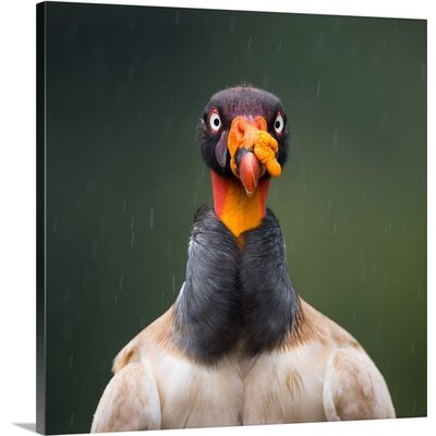 King of the Hill by Olof Petterson Photographic Print on Canvas Size: 20