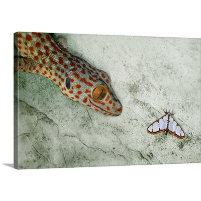 Predator by Jimmy Hoffman Photographic Print on Canvas Size: 24