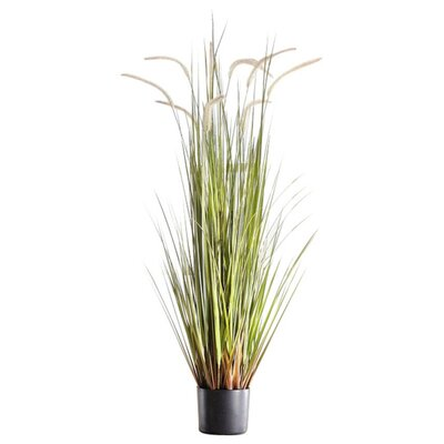 Reed Grass in Round Plastic Planter