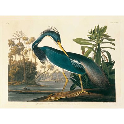 'Louisiana Heron Plate 217' Painting Print on Canvas