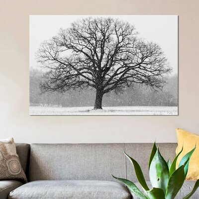 'Old Man Winter' Photographic Print on Canvas URBH8886 38409381