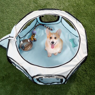Portable Pop up Play Pet Pen Size: 24 H x 38 W x 38 D, Color: Blue