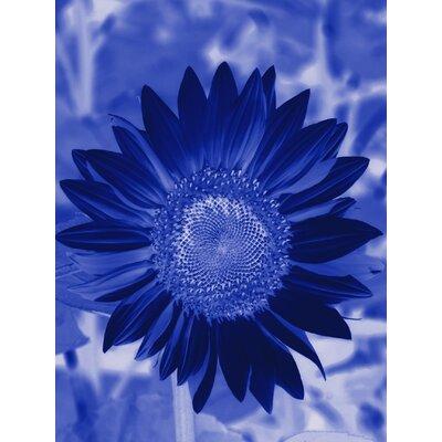 'Sunflower' Graphic Art Print on Canvas