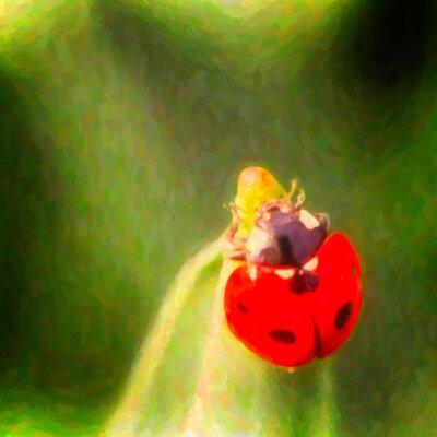'Ladybug Luck' Graphic Art Print on Canvas