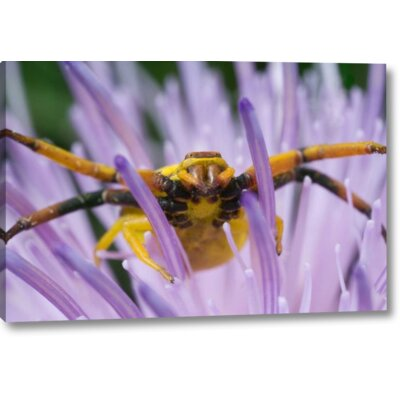 'Indiana, River Road Park Yellow Crab Spider' Photographic Print on Wrapped Canvas 4889C5841FB5476D8E58A61EE40467C5