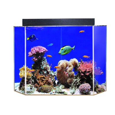 Aquarium Tank Color: Sapphire Blue Back, Size: 16 H x 24 W x 13 D
