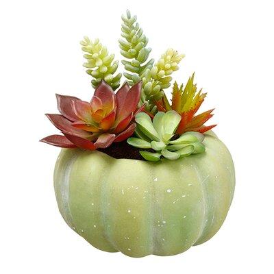 Succulent Pumpkin Floral Resin Arrangements