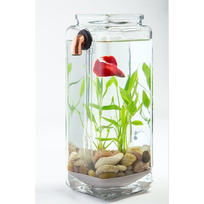 Ocilla 0.5 Gallon Aquarium Kit