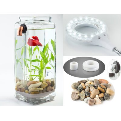 0.5 Gallon Betta Aquarium Kit