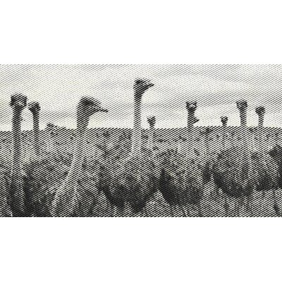 Ostriches Framed Photographic Print