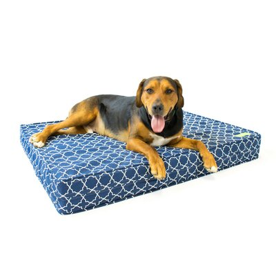 Royal Blue 5 Thick Soft/Firm Reversible Comfort Gel Memory Foam Orthopedic Dog Bed Size: 5 H x 22 W x 27 D