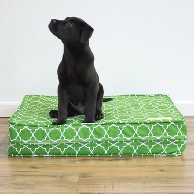 Green 5 Thick Soft/Firm Reversible Comfort Gel Memory Foam Orthopedic Dog Bed Size: 5 H x 22 W x 27 D