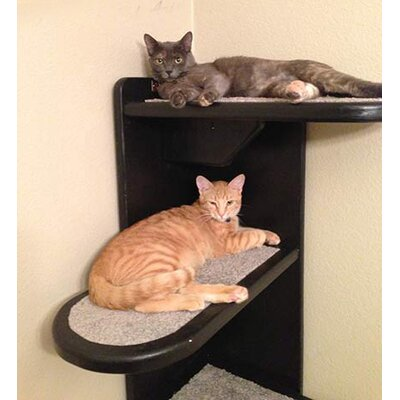 Alexa 48 Right Facing Corner Cat Tree Color: Espresso / Light Brown