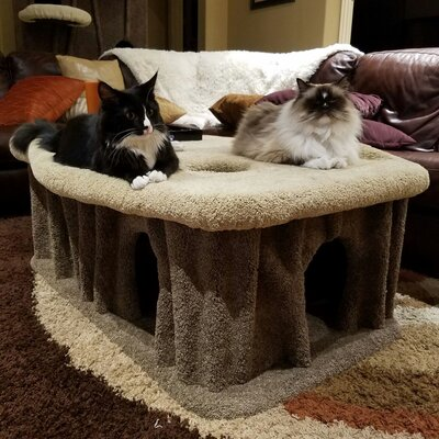 25 Cat Condo Body Color: Green, Perch Color: Ivory Tint
