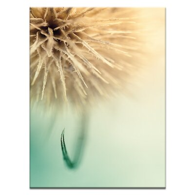 'The Claw' Photographic Print on Wrapped Canvas Size: 20