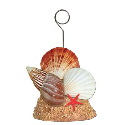 Seashell Photo/Balloon Holder (Set of 6) 50964