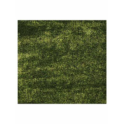 Taquan Hand Tufted Green Area Rug Rug Size: Square 8'