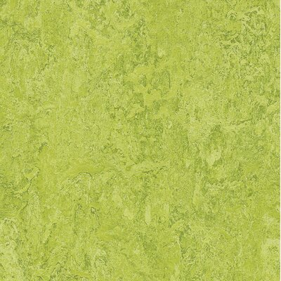 Marmoleum Click Cinch Loc 11.81 x 11.81 x 9.9mm Cork Laminate in Green