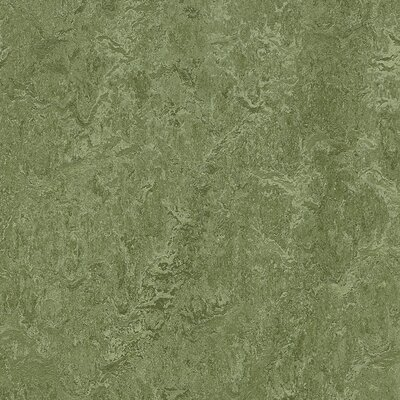 Marmoleum Click Cinch Loc 11.81 x 11.81 x 9.9mm Cork Laminate Flooring in Green