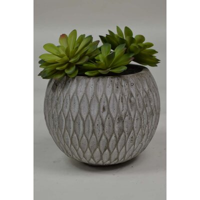 Succulent Plant in Pot (Set of 2) SD91014AM