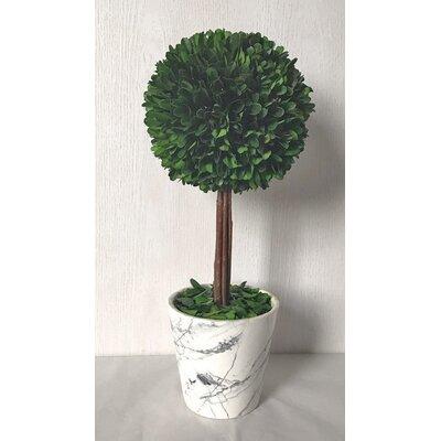 Desktop Boxwood Topiary in Pot