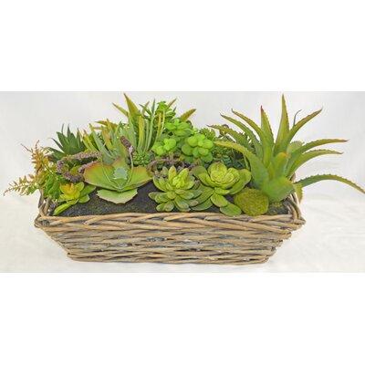 Desktop Succulent Plant in Square Tapered Basket