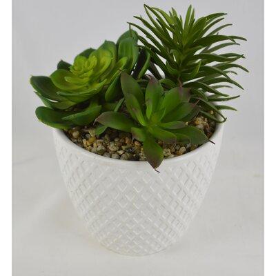 Desktop Artificial Succulent Plant in Pot