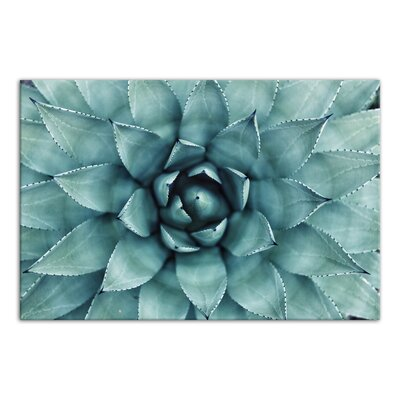 'Turquoise Succulent' Photographic Print on Wrapped Canvas