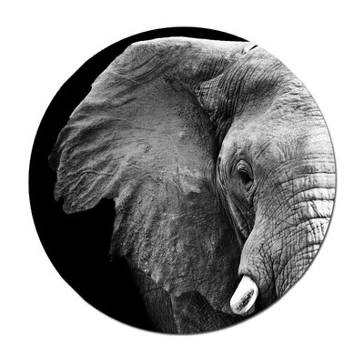 'Elephant Profile' Photographic Print Animal Photography Elephant Profile 24x24