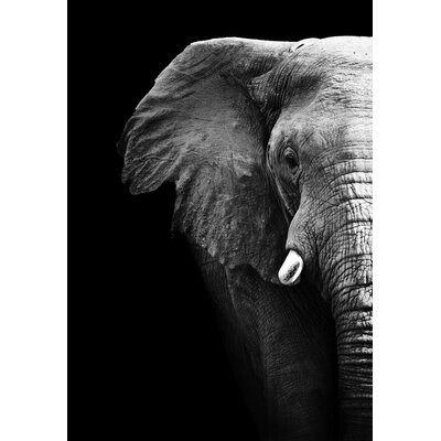 'Elephant Profile' Photographic Print Animal Photography Elephant Profile 16x20