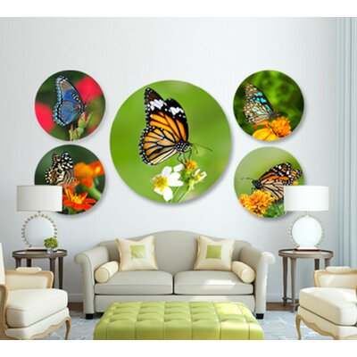 "Beautiful Butterfly' Photographic Print on Acrylic Size: 24"" H x 24"" W Nature Art ""Beautiful Butterfly, Four"" 24x24"