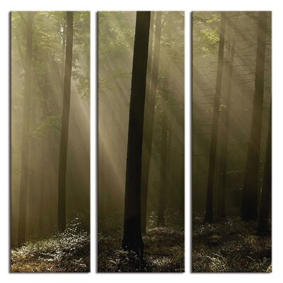 'Forest Rays Deep Woods' Photographic Print Multi-Piece Image on Wrapped Canvas LTCNV2087