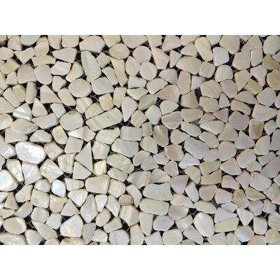 Mesh Mounted Random Sized Authentic Polished Seashell Mosaic Tile in White