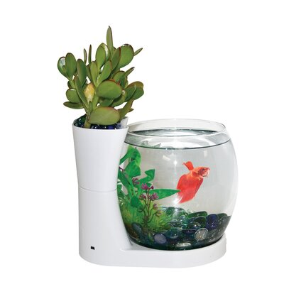 0.75 Gallon Betta Planter Aquarium Bowl Color: White