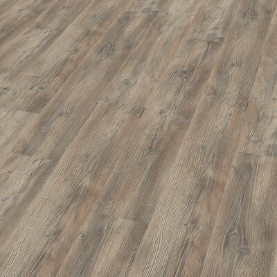 7 x 47 x 8mm Pine Laminate Flooring in Gray