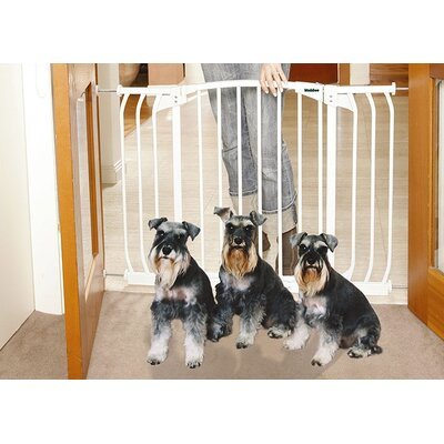 Hallway Pet Gate in White