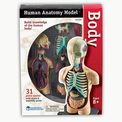 Model Human Body Anatomy LER3336